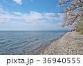 花 桜 ソメイヨシノの写真 36940555