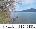 花 桜 ソメイヨシノの写真 36940561