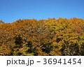 紅葉 林 雑木林の写真 36941454