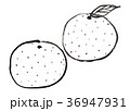 みかん 水彩画 36947931