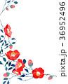 椿 花 花柄のイラスト 36952496