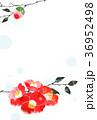 椿 花 花柄のイラスト 36952498