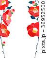 椿 花 花柄のイラスト 36952500