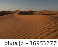 砂漠 サハラ 風紋の写真 36953277