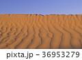 サハラ 砂漠 風紋の写真 36953279