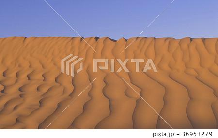 サハラ砂漠の風紋 36953279