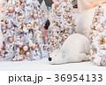 クリスマス 樹木 樹の写真 36954133