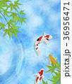 和を感じる背景素材 (鯉、水面、青紅葉) 36956471