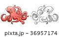 Octopus colorful and contour 36957174