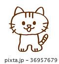 猫 36957679