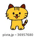 猫色付き 36957680