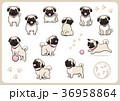 パグ 犬 戌年のイラスト 36958864