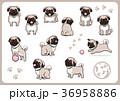 パグ 犬 戌年のイラスト 36958886