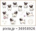 パグ 犬 戌年のイラスト 36958926