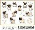 パグ 犬 戌年のイラスト 36958956