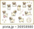 パグ 犬 戌年のイラスト 36958980