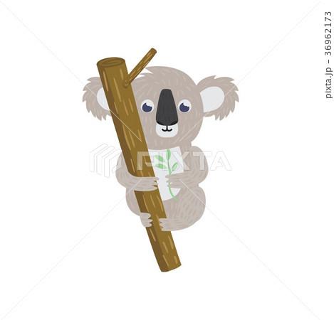 Koala bear on tree branch. Native animal of 36962173