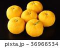柚子 果実 フルーツの写真 36966534