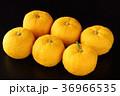 柚子 果実 フルーツの写真 36966535