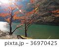 嵐山渓谷 秋 京都市の写真 36970425