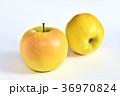 リンゴ(こうこう) 36970824