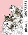 狼 花 タイリクオオカミのイラスト 36972261