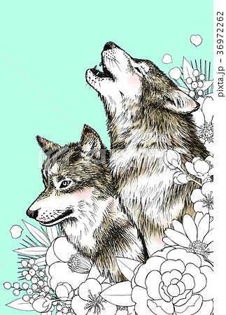 狼と花のイラスト素材 36972262 Pixta