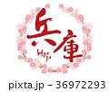 兵庫 筆文字 桜 フレーム 36972293