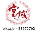 筆文字 桜 花のイラスト 36972792