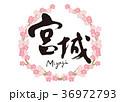 筆文字 桜 花のイラスト 36972793