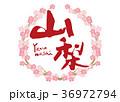 山梨 筆文字 桜 フレーム 36972794