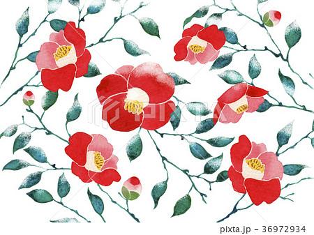 椿 壁紙  背景 水彩 イラスト 36972934