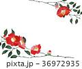 椿 壁紙  背景 水彩 イラスト 36972935