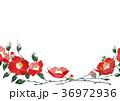 椿 壁紙  背景 水彩 イラスト 36972936