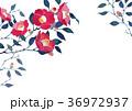 椿 壁紙  背景 水彩画 36972937