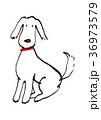 白い犬 36973579