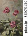 3輪のバラ 36975130