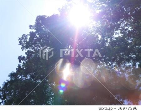 美しい朝日の輝き 36977596