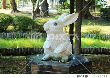 出雲大社 因幡の白ウサギ 36977644