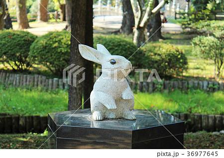 出雲大社 因幡の白ウサギ 36977645