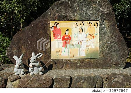 出雲大社 因幡の白ウサギ 36977647