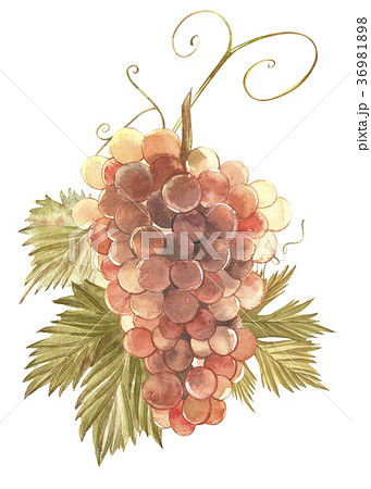 Strawberry leaves with flowers and ripe berries 36981898