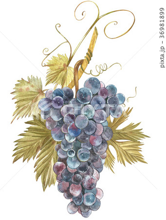 Strawberry leaves with flowers and ripe berries 36981899