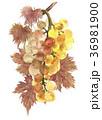 いちご イチゴ 苺のイラスト 36981900