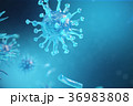 Viral hepatitis infection causing chronic liver 36983808