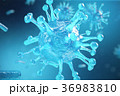Viral hepatitis infection causing chronic liver 36983810