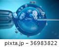 3d illustration artificial insemination 36983822
