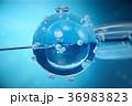 3d illustration artificial insemination 36983823