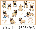フレンチブルドッグ 犬 戌年のイラスト 36984943