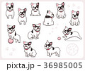 フレンチブルドッグ 犬 戌年のイラスト 36985005